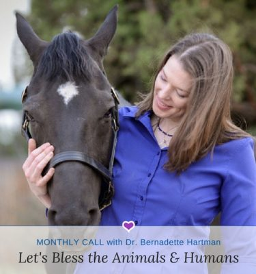 Let's Bless the Animals, Dogs, Cats, Horses & Humans monthly call with Dr. Bernadette Hartman